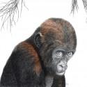 Hanneke Messelink -Anders Adjibolo_baby gorilla_drukwerk_kaart
