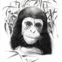 Hanneke Messelink-Anders  Lola_baby chimp_drukwerk_kaart